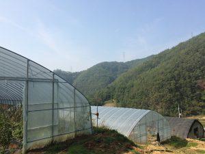 Rubans adhésifs pour agriculture, serres